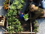 orto raccogliere verdura coltivare