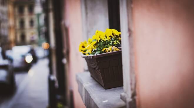 finestra primavera città poesia