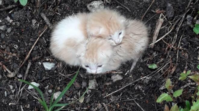 Gattini abbandonati_bagnacavallo