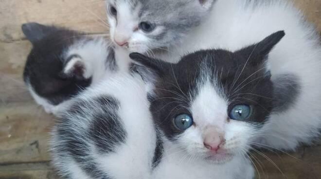gattini abbandonati Enpa Lugo - giugno 2020