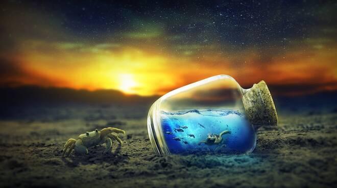 granchio fauna marina (immagine free da pixabay)