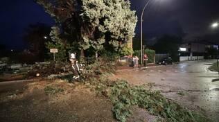 albero caduto nella Circonvallazione rotonda ai Goti, maltempo ravenna 11 luglio