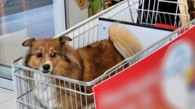 cane negozi carrello