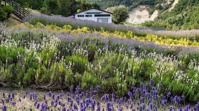 giardino erbe casola valsenio lavanda