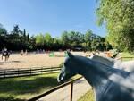 Le siepi - Milano Marittima - equitazione