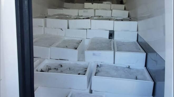 Pesce - capitaneria di  porto 01 07 2020