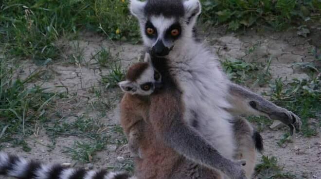 cuccioli Safari Ravenna 2020