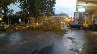 Notte di temporali sulla costa ravennate: a Cervia grandine e crolli di alberature