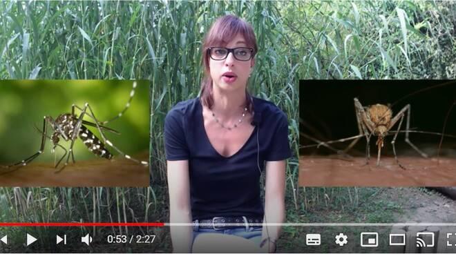 """""""Zanzare in pillole"""": ecco i VIDEO su come comportarsi e proteggersi"""