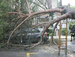albero caduto vento marina romea