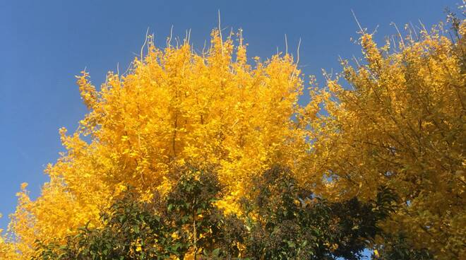 meteo - autunno