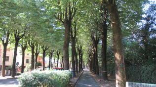 viale tigli castel bolognese