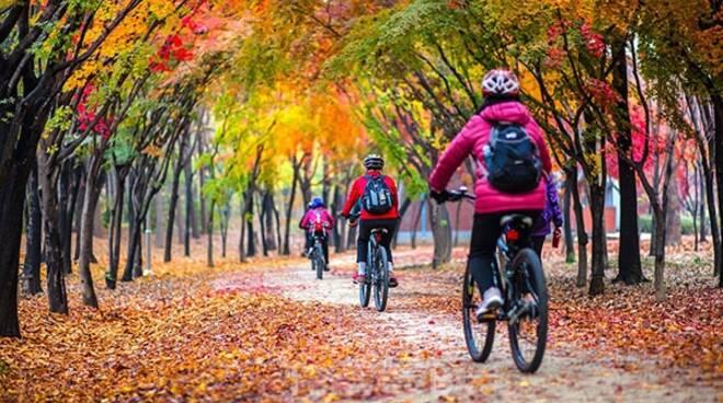bicicletta - autunno