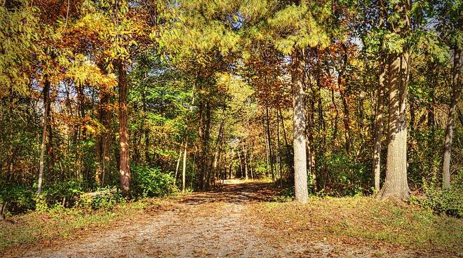 Foresta_Urbana