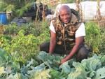 """""""Il Terzo Mondo"""" Onlus: continua con soddisfazione l'attività agricola dell'associazione"""