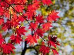 meteo autunno foglie