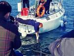 Riccione, i membri di Fondazione Cetacea accompagnano la tartaruga 'Roccia' nel suo viaggio verso la libertà