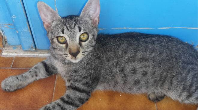 gatti Enpa lugo - dicembre 2020