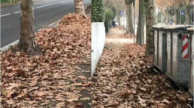 macchina spazzatrice - marciapiedi - foglie