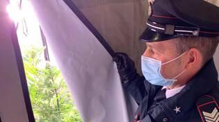 Monte Scudo -Carabinieri scoprono 21 piante di marijuana