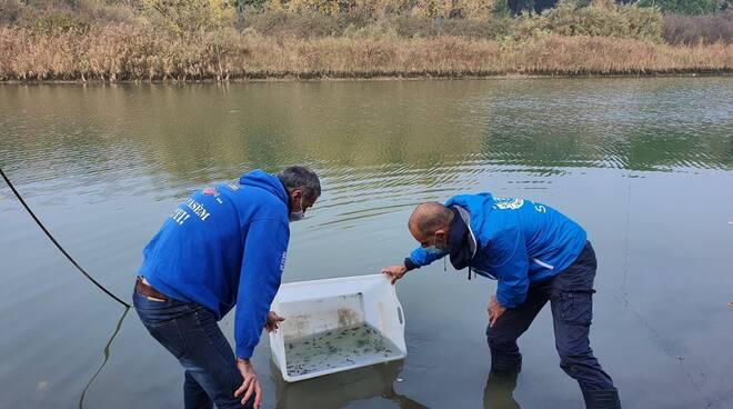 storioni e anguille liberati