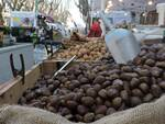 bellaria mercato