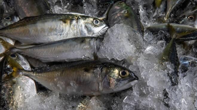 Pesce_Pescato