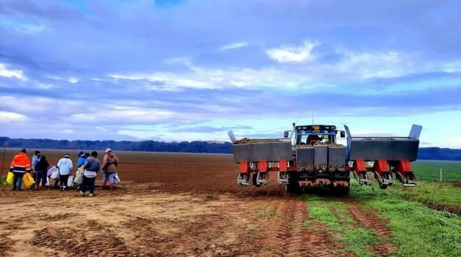 agricoltura campi sementi
