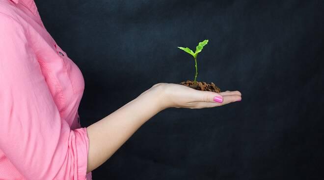 donna agricoltura pianta crescita