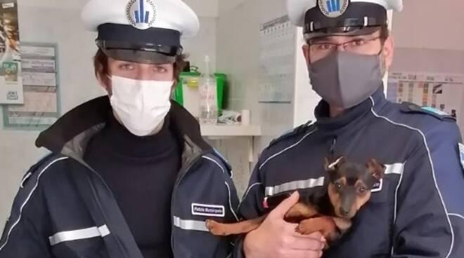 Faenza_Polizia_Locale