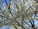 meteo - primavera - piante fiorite