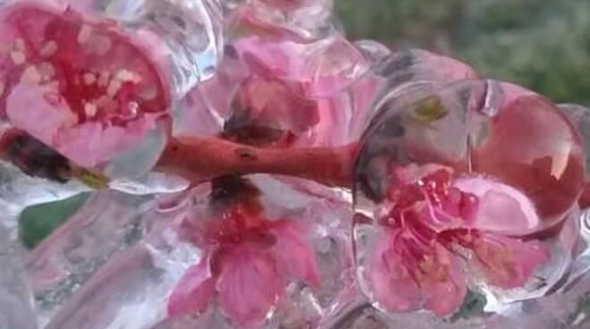 gelo agricoltura piante da frutto