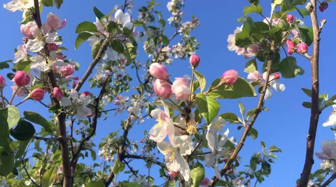 meteo fiori filari primavera