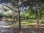 Atti vandalici nella pineta di Pinarella
