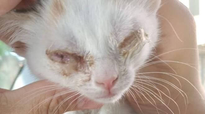 Gattini abbandonati in fin di vita a Bagnacavallo
