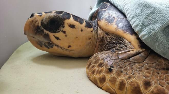 tartarughe spiaggiate