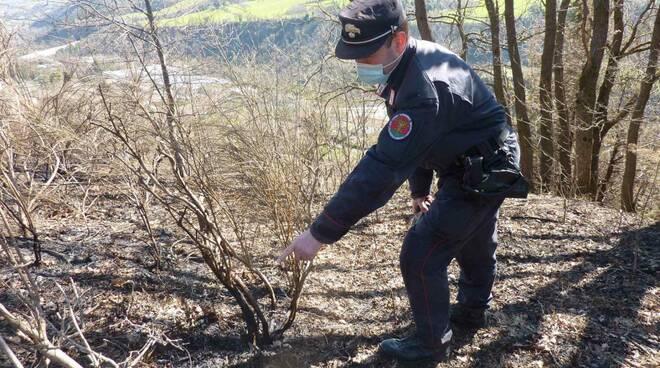 Carabinieri Forestale Forlì-Cesena