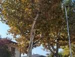 massa_lombarda_alberi