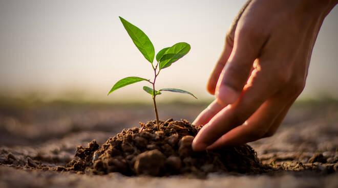 piantare albero